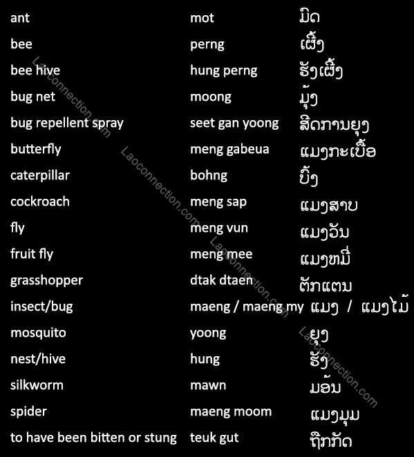 Lao Language:  Insects, Bugs, and Related Words written in Lao and English