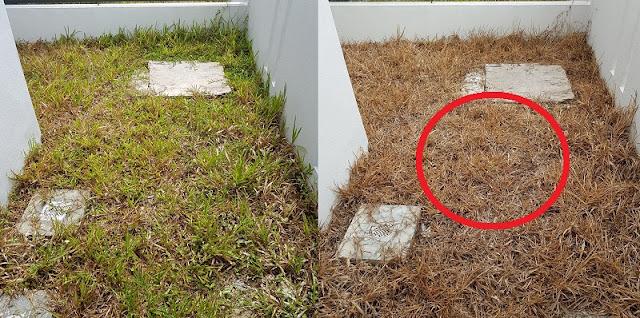 HARUS COBA!! Kamu Sering Kesal Rumput di Halaman Selalu Tumbuh, Hanya Pakai Benda Rumahan Ini Saja Untuk Membasminya !