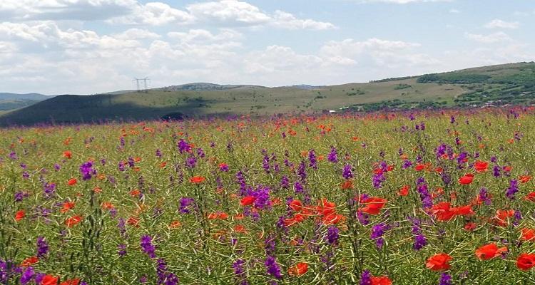 Floricele in Parcul Național Munții Măcinului