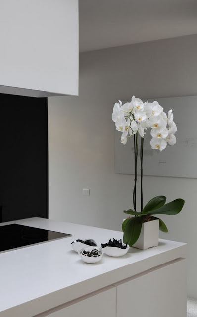 Decorate Your Interior With Orchids 9