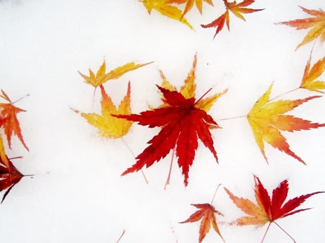 モミジの赤い葉