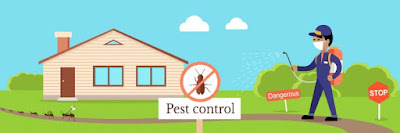 شركة مكافحة حشرات فى مدينة حائل 0552637020