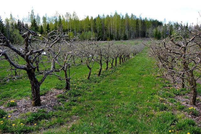 Blogiretki Länsi-Uudellemaalle, Alitalon viinitila, siiderimö, Ciderberg