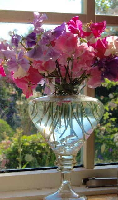 scented Lathyrus