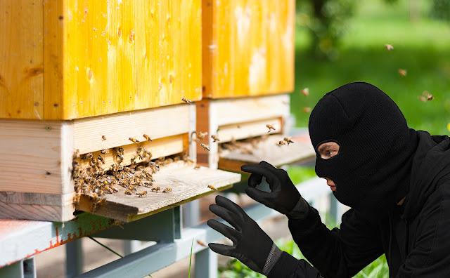 Κλοπή μελισσιών στο Κορωπί