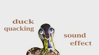 learn duck animal sounds