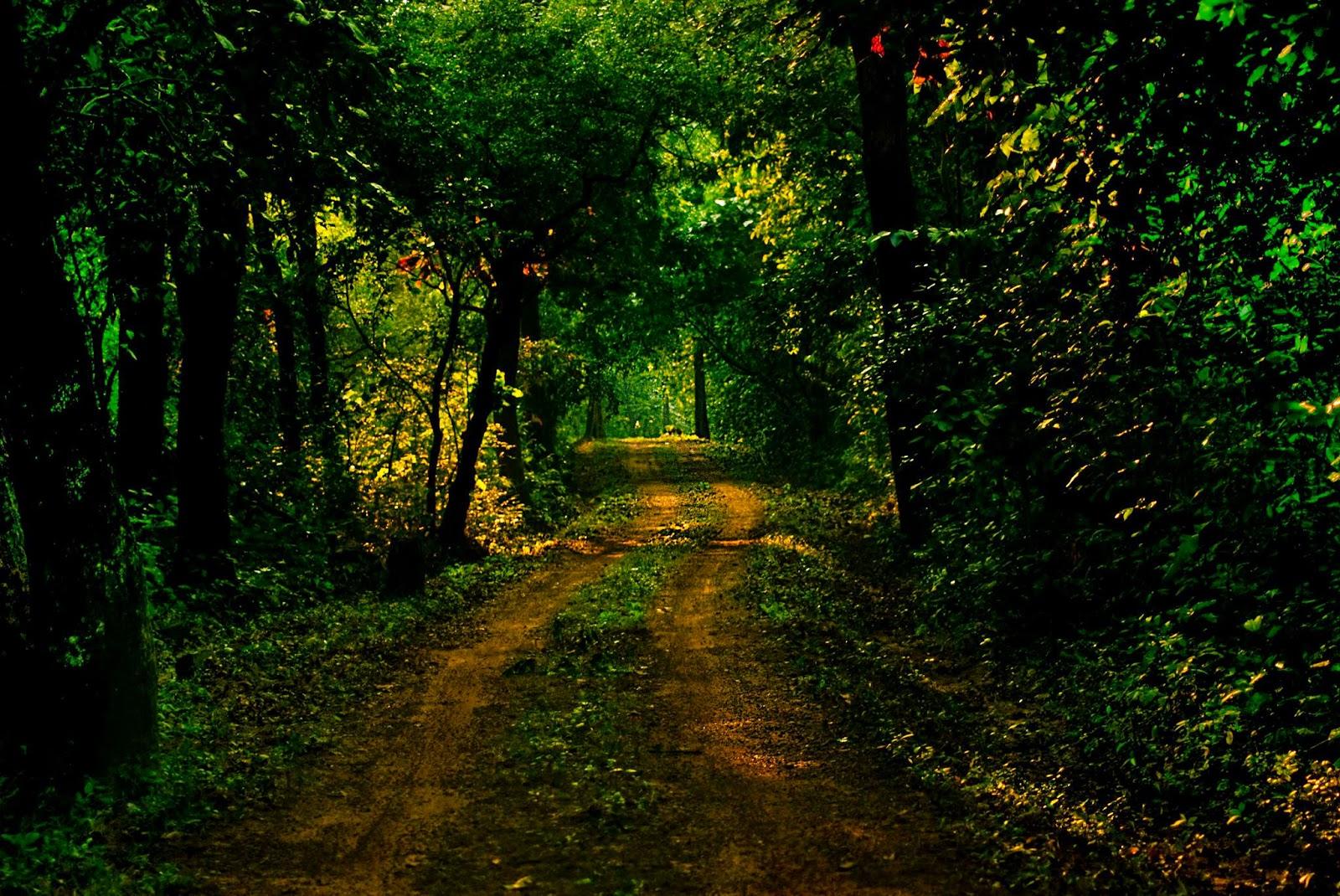Through the jungle road of Kuldiha