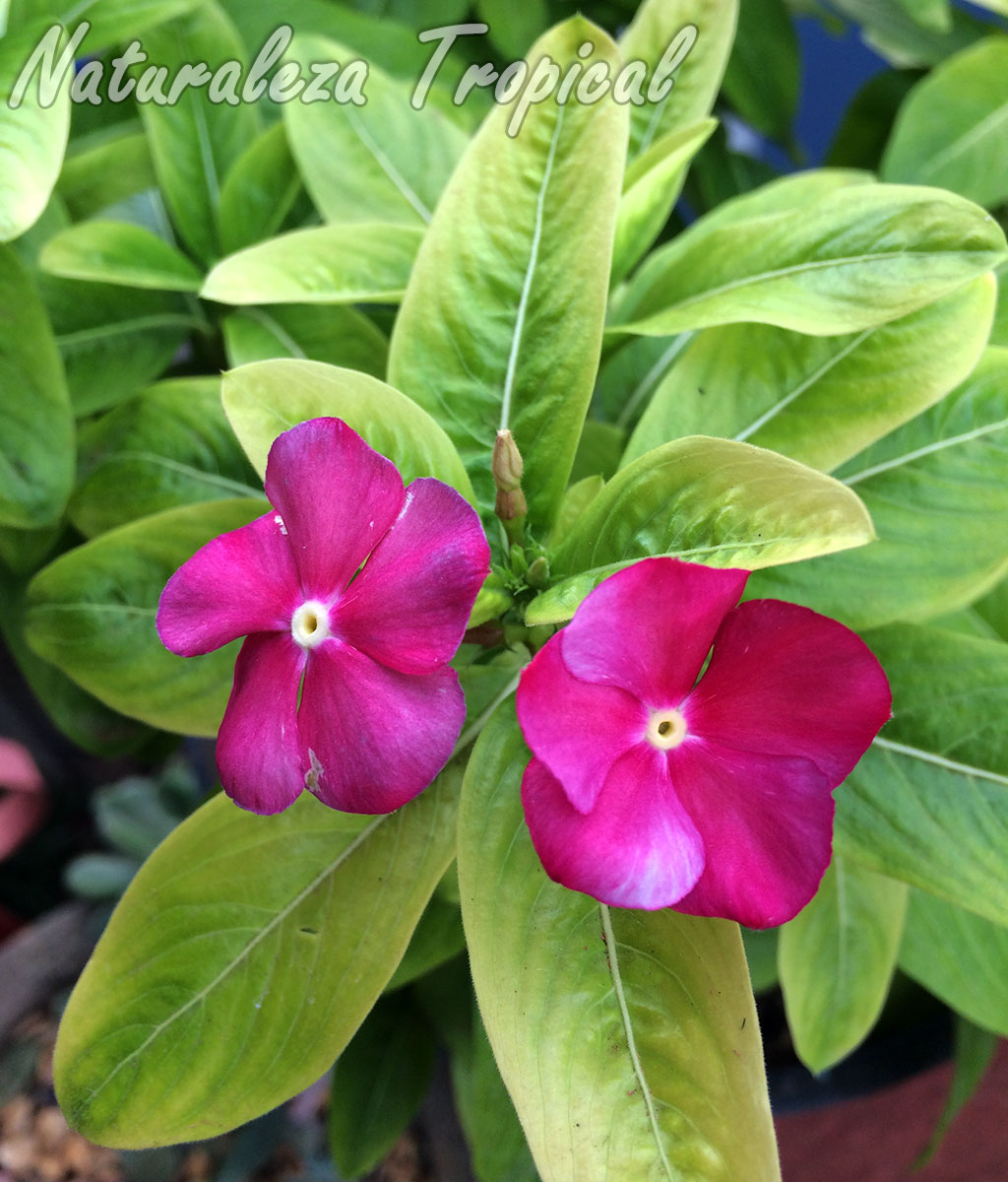 Naturaleza tropical por qu nuestras plantas cambian sus for Algunas plantas ornamentales