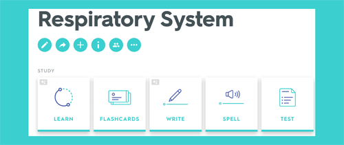 Respiratory System Quizlet Study Unit