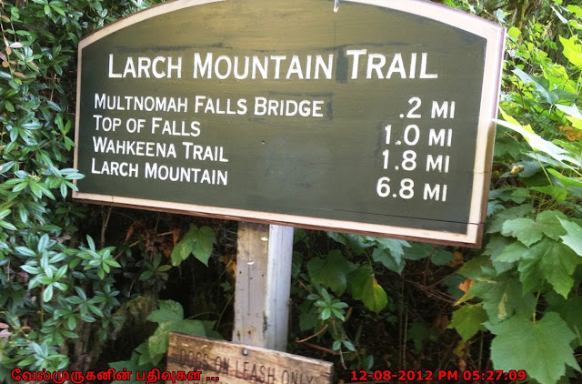 Larch Mountain Trail Portland