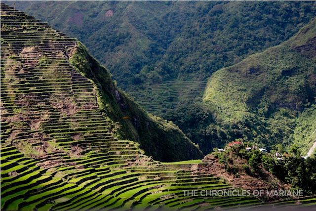 unesco rice terraces