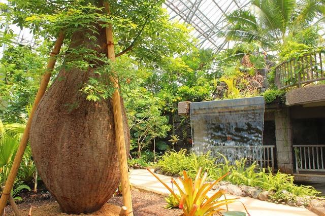 山口県、宇部市のときわ公園の植物園がリニューアルしたよ【Y】 プラントハンター西畠清順、世界を旅する植物館