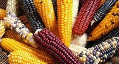 México, territorio del maíz