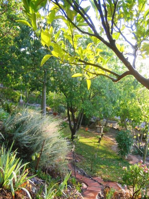 Un jardin bajo los pinos junio 2017 for Capillas de velacion jardin de los pinos