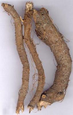 Rễ cây gai
