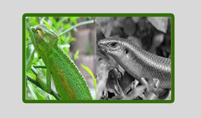 Contoh Kamuflase dan Aposematik pada hewan