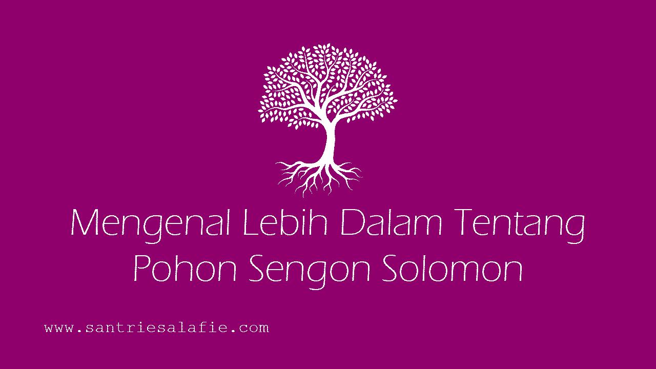 Mengenal Lebih Dalam Tentang Pohon Sengon Solomon by Santrie Salafie