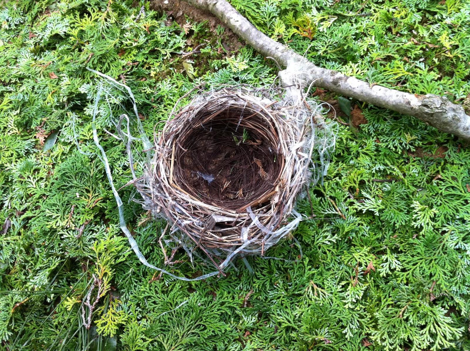 庭に鳥が巣を作りました - 鳥 解決済み| 【OKWAVE】