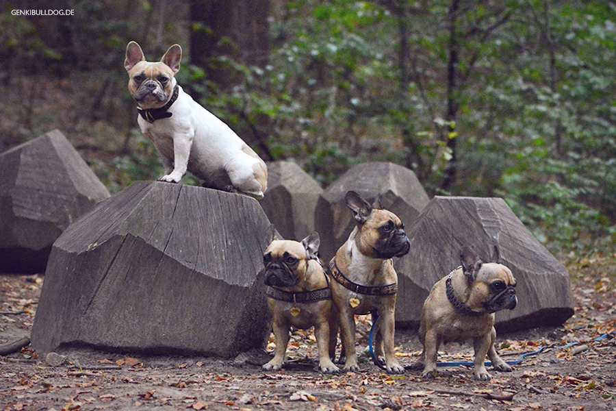 8. Internationaler Waldkunstpfad - Hundeblog Genki Bulldog