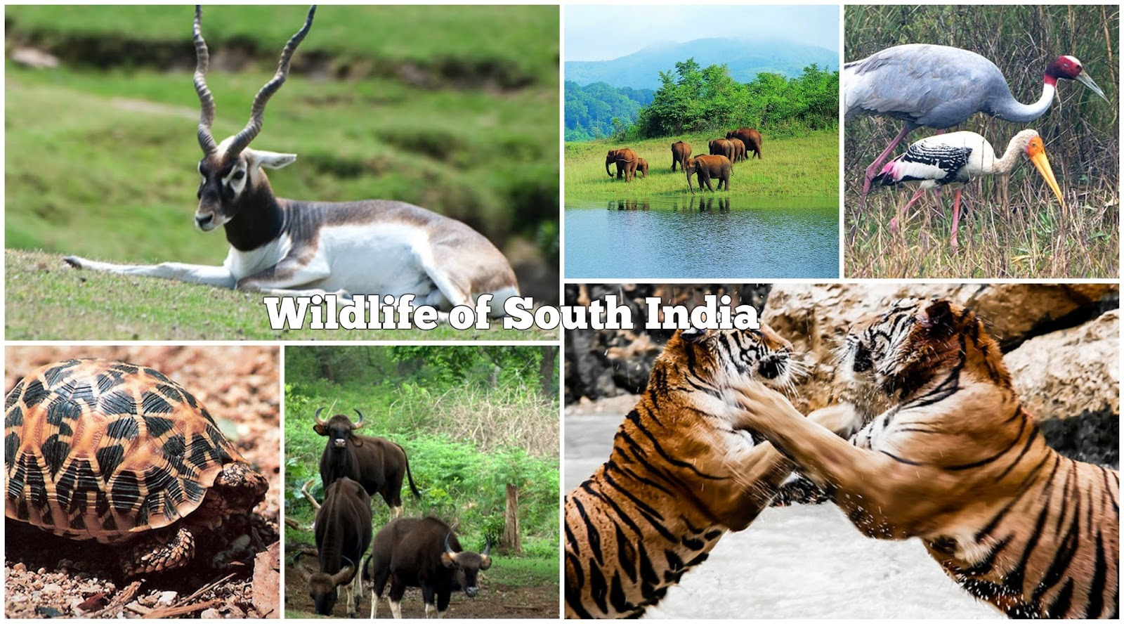 wildlife of india an introduction Gavialis gangeticus, great indian bustard, ardeotis nigriceps, india introduction  wildlife resources constitute a vital link in the survival of the human species and.