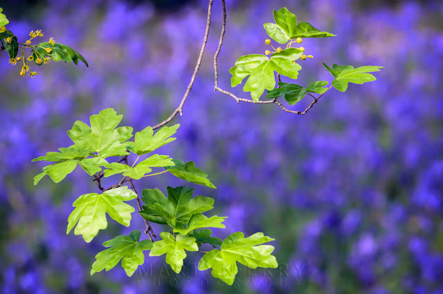 Vibrant green and blue image in Brampton Wood Nature Reserve