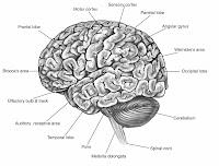 Brain Jack Image: Brain Function Map
