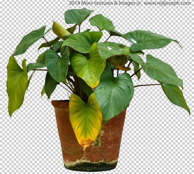 PNG Garden Plant Texture 00004