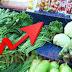 Harga Sayuran Di Ambon Kembali Bergerak Naik
