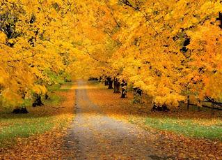 تصميمات فصل الخريف