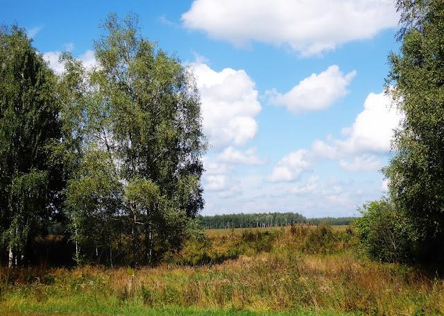 Leśno-stepowy krajobraz w okolicach Briańska.