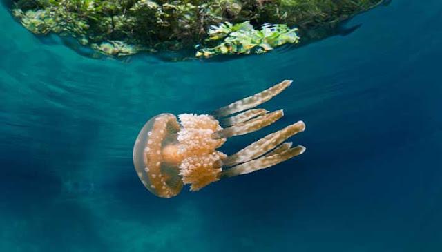 بالصور.. أسرار الحياة في قاع المحيط الهادئ!