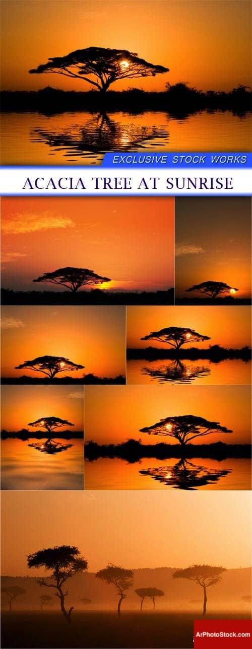 تحميل 7 صور لشجرة السنط وقت الغروب بجودة عالية