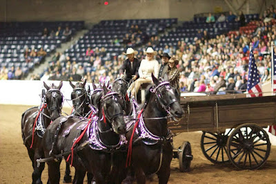 Gentle Giants: Whispery Pines Percherons