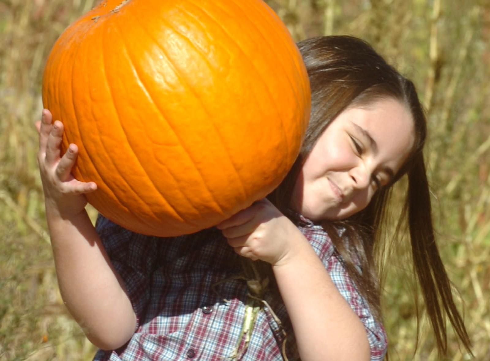 Autumn Lights Picture Autumn Jokes For Children