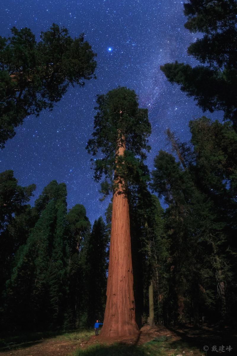 Sao Vega bên trên cây cổ thụ già nhất và lớn nhất thế giới. Hình ảnh: Jeff Dai.