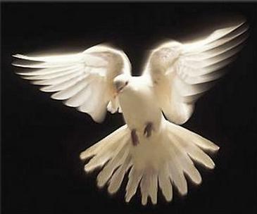 Resultado de imagen para paloma espiritu santo