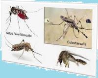 Mosquito,Remove,30 Seconds,মশা,দূর করুন,৩০ সেকেন্ডেই,Coil,Spray.mosquito,Remove The Mosquito In 30 Seconds,Remove The Mosquito In 30 Seconds,knowledge,Remove The Mosquito In 30 Seconds, 30 সেকেন্ডে মশারি অপসারণ করুন