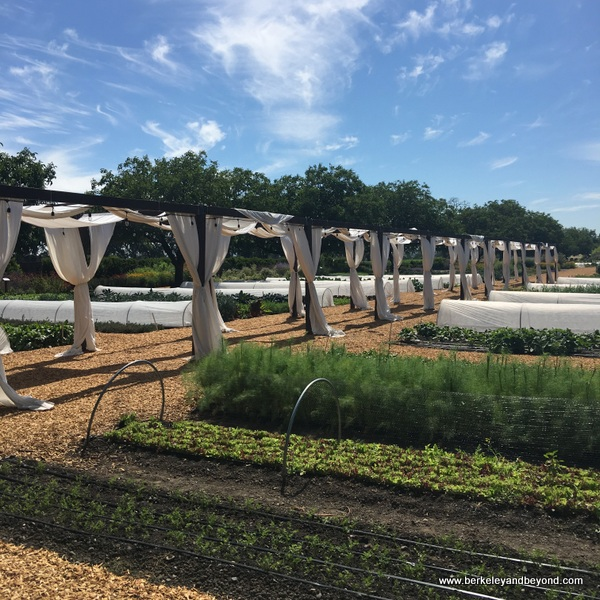 gardens at Kendall-Jackson Wine Estate & Gardens in Fulton, California