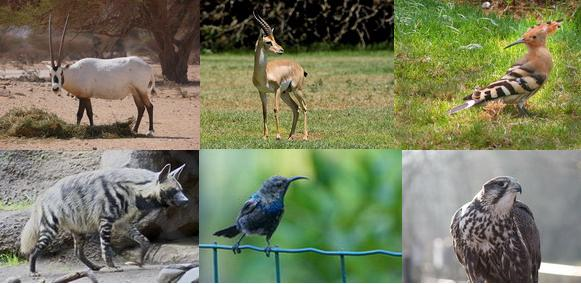 بحث عن الحيوانات الأليفة  والحيوانات البريّة منافعها ومضارها