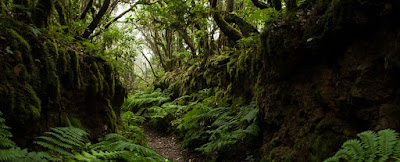 Camino de Las Vueltas-Taganana