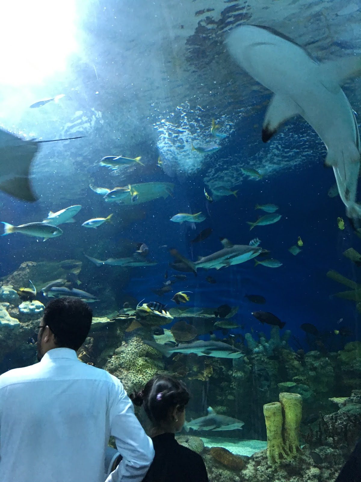 Fish aquarium in jeddah - Fakieh Aquarium Jeddah
