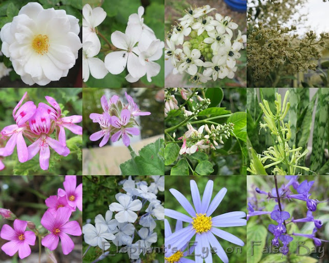 White, pink, blue and purple flowers in March