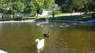 (Almost) Wordless Wednesday - swans