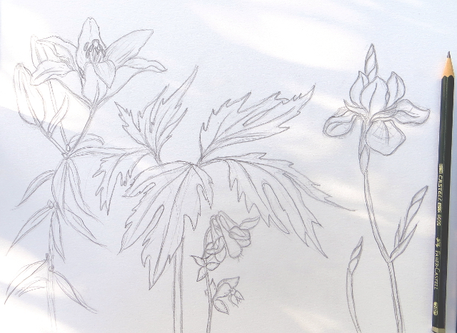 Summer garden flower sketch