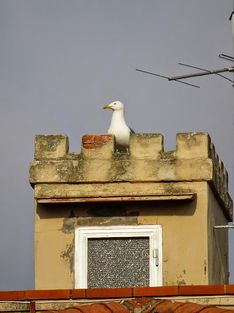 Gull on a turret, Livorno