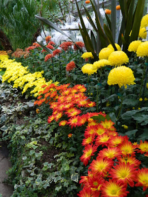 Massed orange and yellow mums at 2016 Allan Gardens Conservatory  Fall Chrysanthemum Show by garden muses-not another Toronto gardening blog