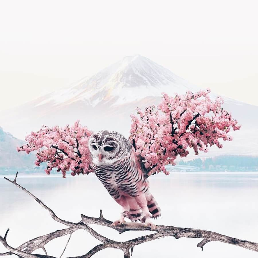 03-Owl-in-Cherry-Tree-Luisa-Azevedo-www-designstack-co