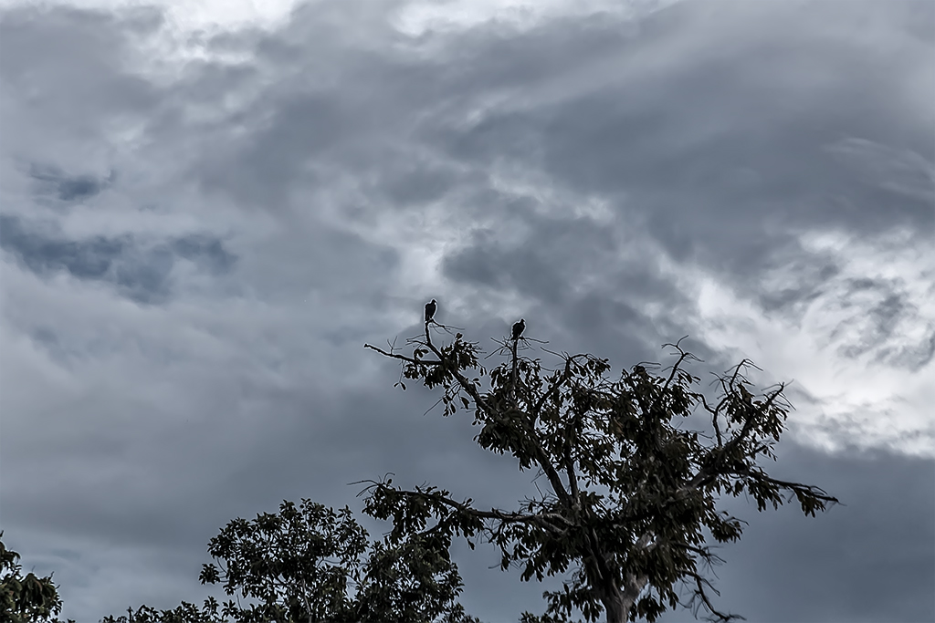 aves rio Amazonas