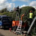 Best Tree Surgeons In Harrow - To Keep Your Trees Healthy