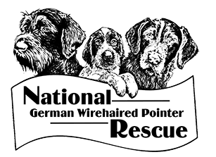 National German Wirehaired Pointer Rescue